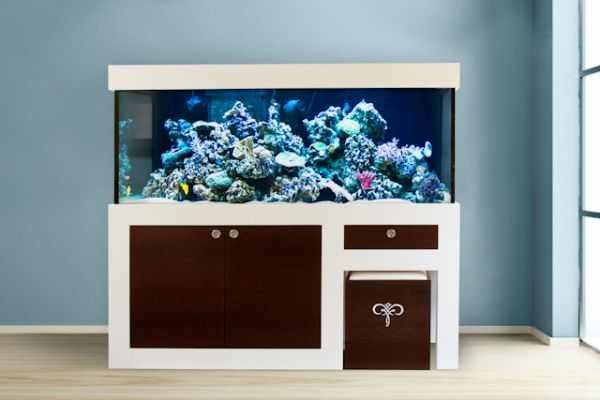 aquarium beispiele bei cocoon republic design aquarium. Black Bedroom Furniture Sets. Home Design Ideas